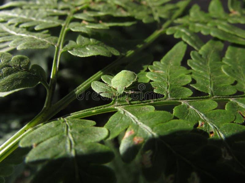 Insecto en las hojas imagen de archivo