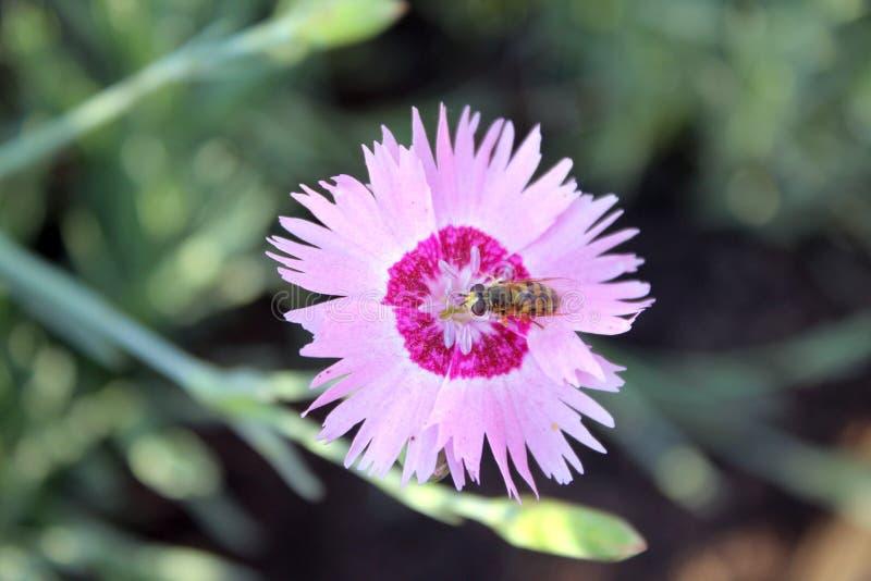 Insecto en un clavo foto de archivo
