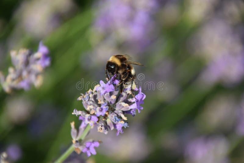 Insecto en una flor hermosa foto de archivo