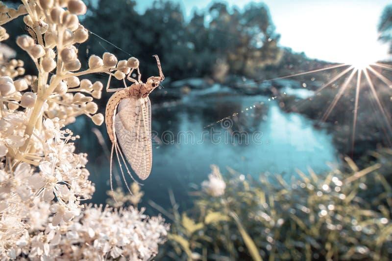 Insecto en una planta imagenes de archivo