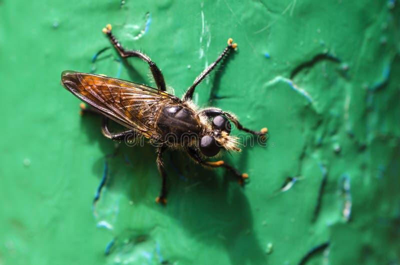 Insecto grande como avispa imagenes de archivo