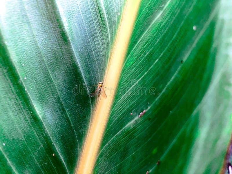 Insecto Metálico En Una Hoja Imagen de archivo - Imagen de brillante ...