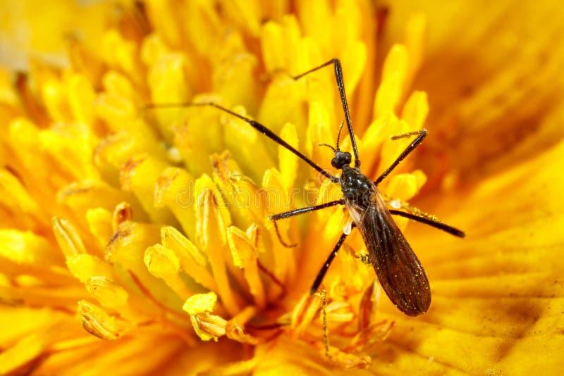 Insecto negro imagen de archivo