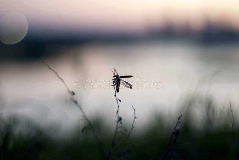 Insecto negro en la planta minúscula en la luz de la tarde imagenes de archivo