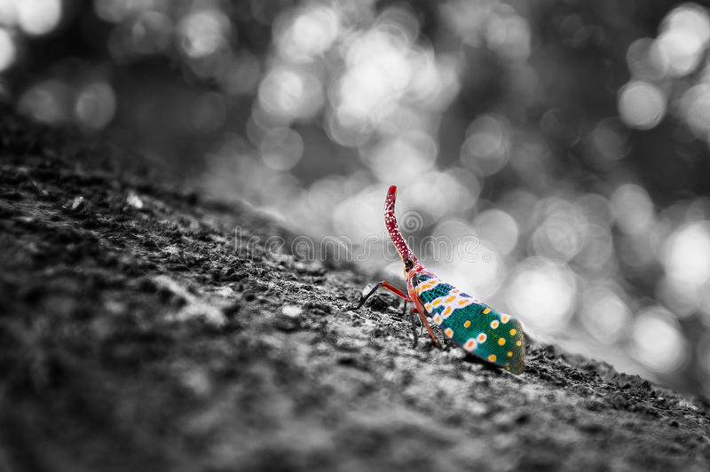 Insecto precioso de la luna blanco y negro y colorido imágenes de archivo libres de regalías