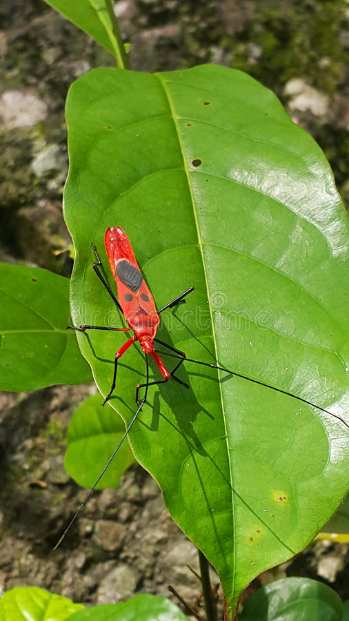 Insecto rojo imagenes de archivo