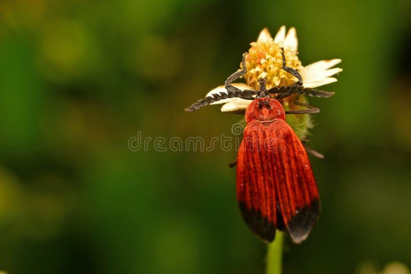 Insecto rojo con la flor hermosa foto de archivo libre de regalías