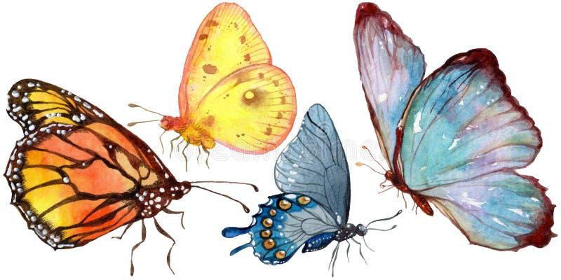 Insecto salvaje de las mariposas exóticas en un estilo de la acuarela aislado stock de ilustración