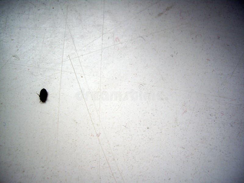 Insecto sucio blanco y negro de Grunge fotos de archivo libres de regalías
