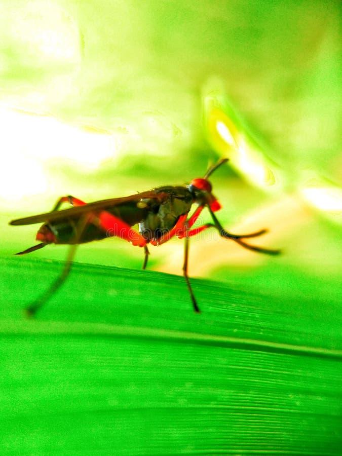 Insecto y verde fotos de archivo