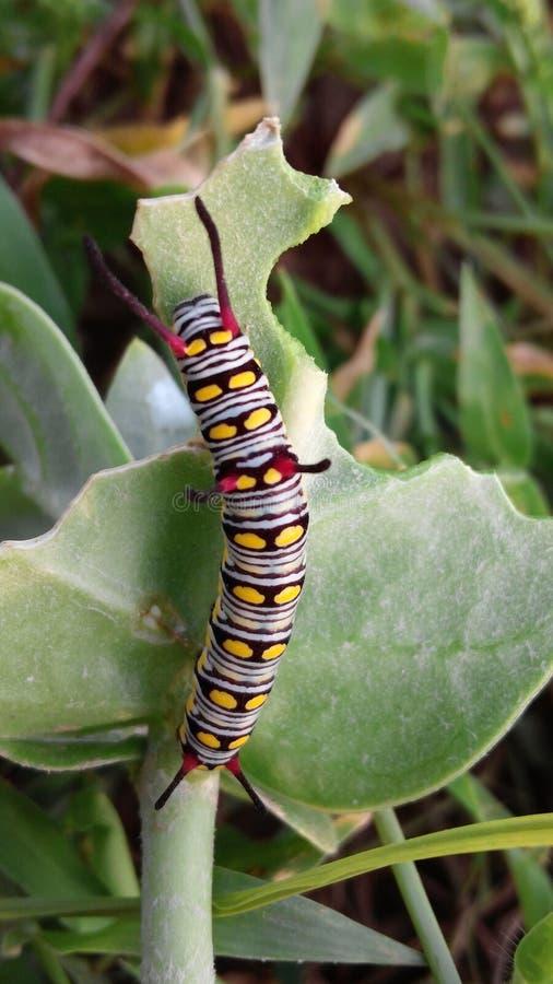 insectos imagenes de archivo