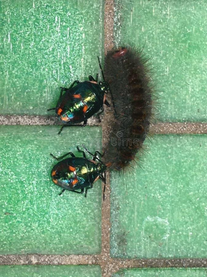 Insectos contra oruga fotos de archivo