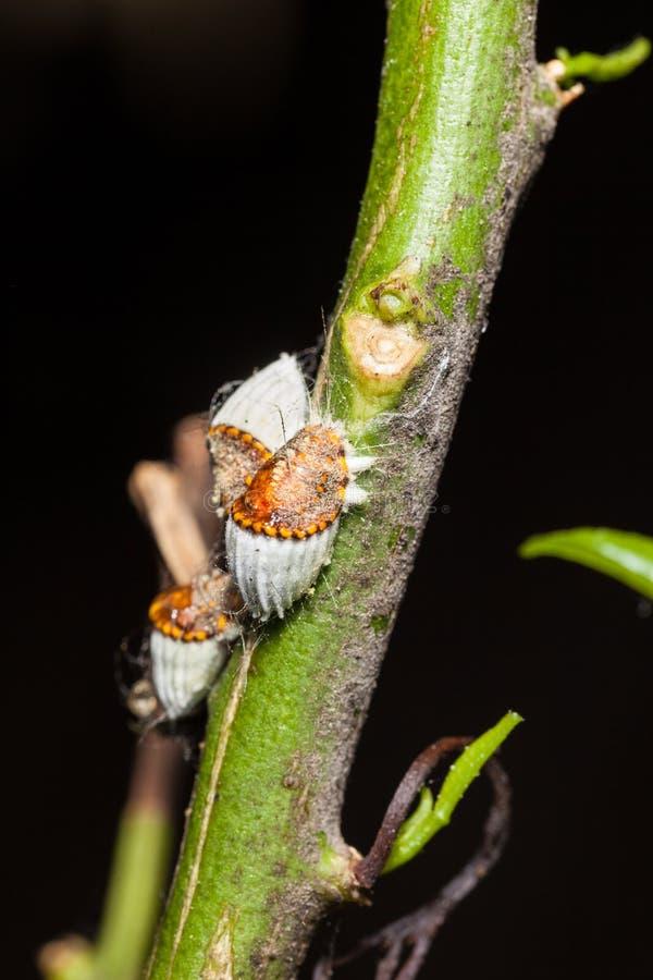 Insectos de escala imagen de archivo libre de regalías