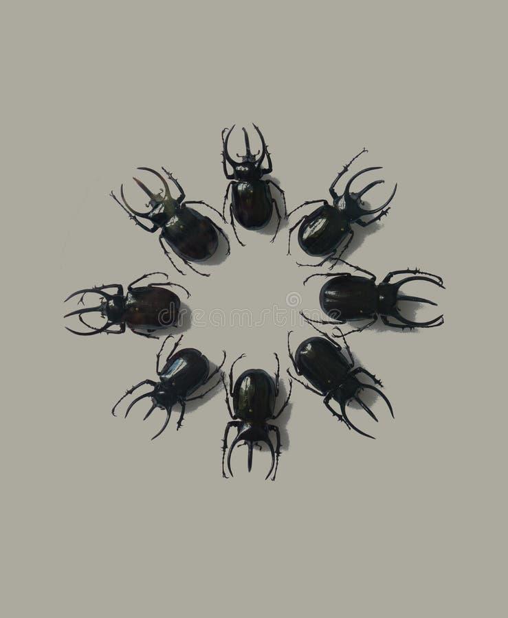 Insectos del insecto del escarabajo en la exhibición imagenes de archivo