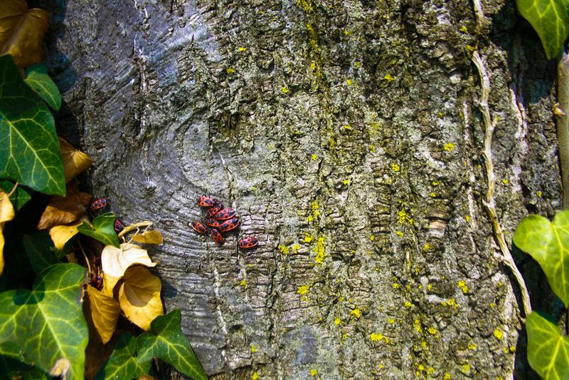 Insectos en árbol imagenes de archivo