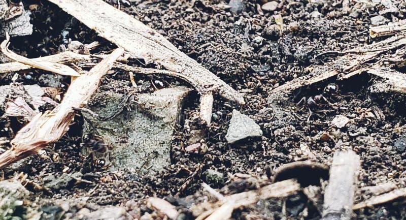 insectos en el jard?n fotos de archivo