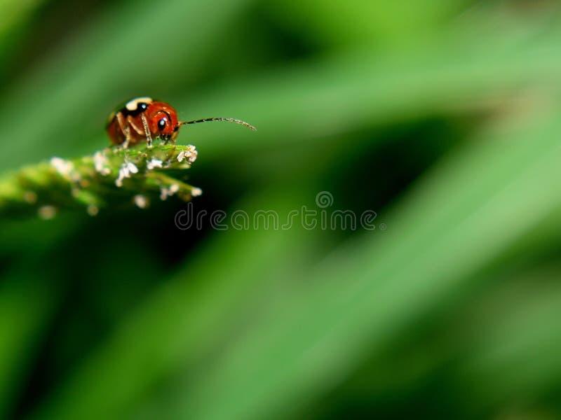 insectos en hoja verde fotos de archivo