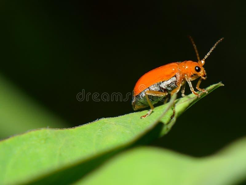 insectos en hoja verde foto de archivo libre de regalías