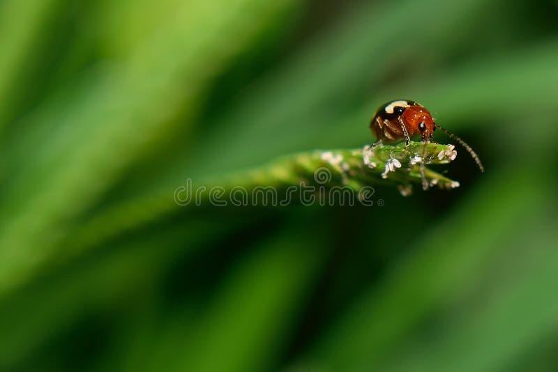 insectos en hoja verde imagen de archivo libre de regalías