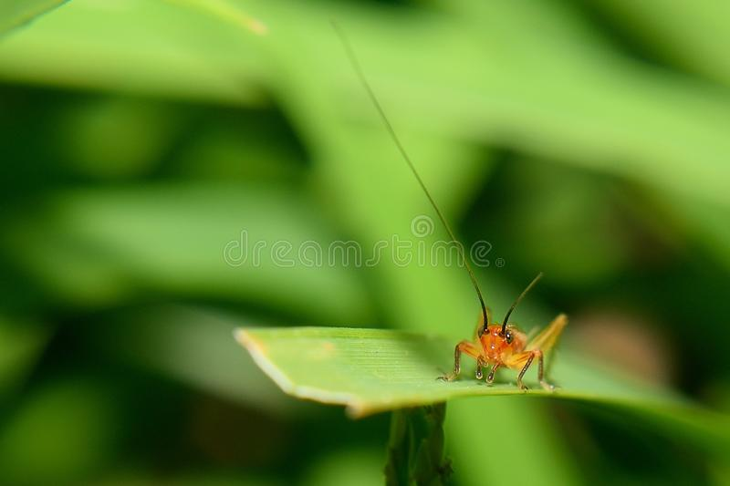 insectos en hoja verde fotos de archivo libres de regalías