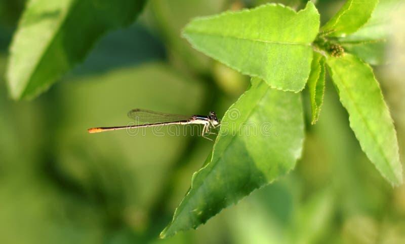 insectos en hoja verde fotografía de archivo