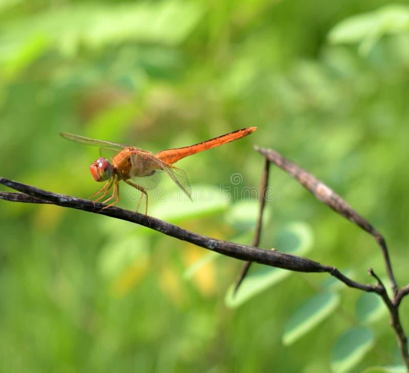insectos en hoja verde imágenes de archivo libres de regalías