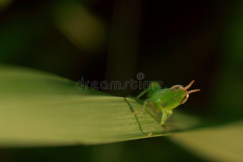 insectos en hoja verde fotografía de archivo libre de regalías