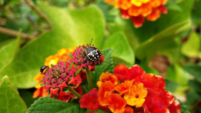 Insectos en las flores durante la primavera fotos de archivo