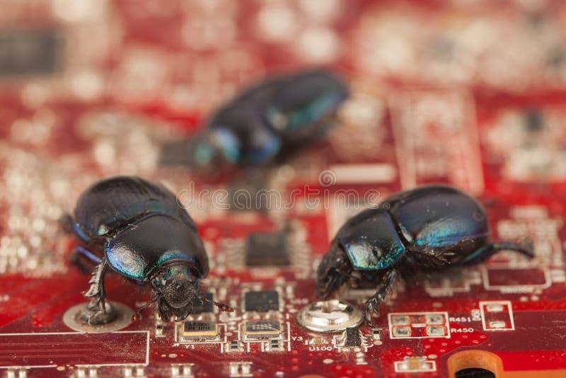 Insectos en un chip de ordenador fotos de archivo