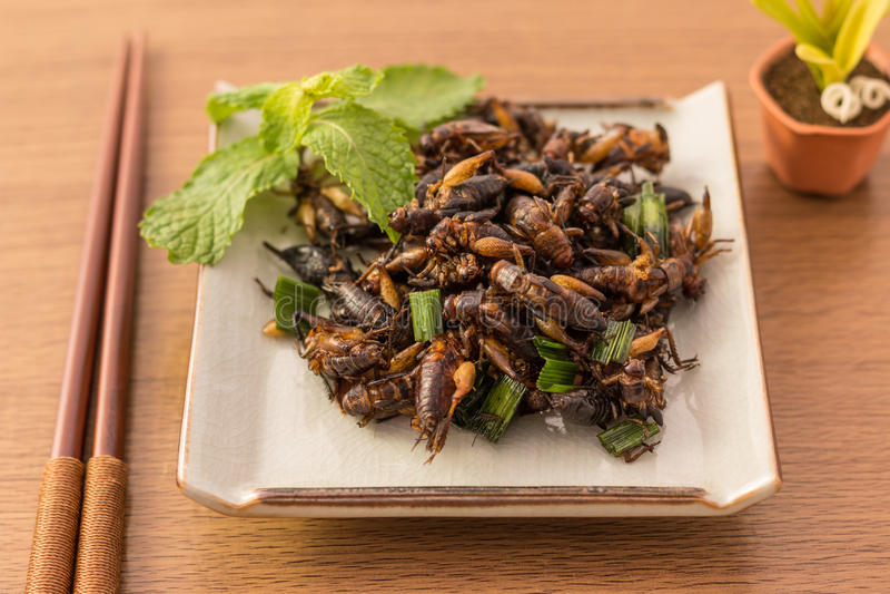 Insectos fritos imagen de archivo