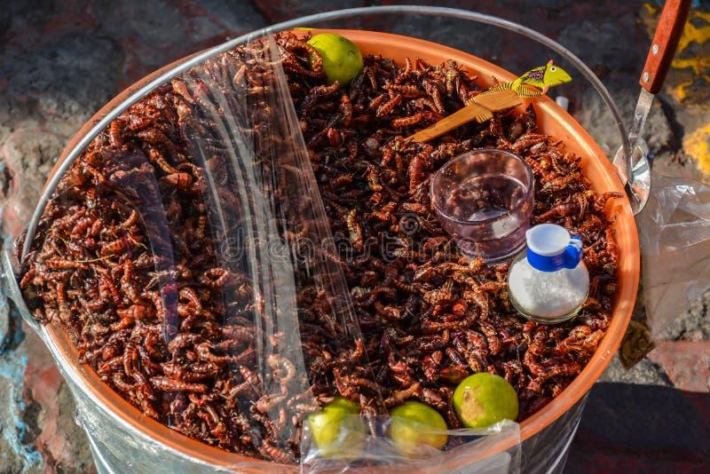 Insectos para el almuerzo fotografía de archivo libre de regalías