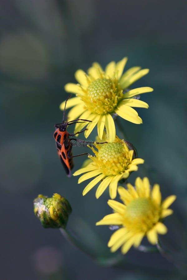 Insectos y flores foto de archivo libre de regalías