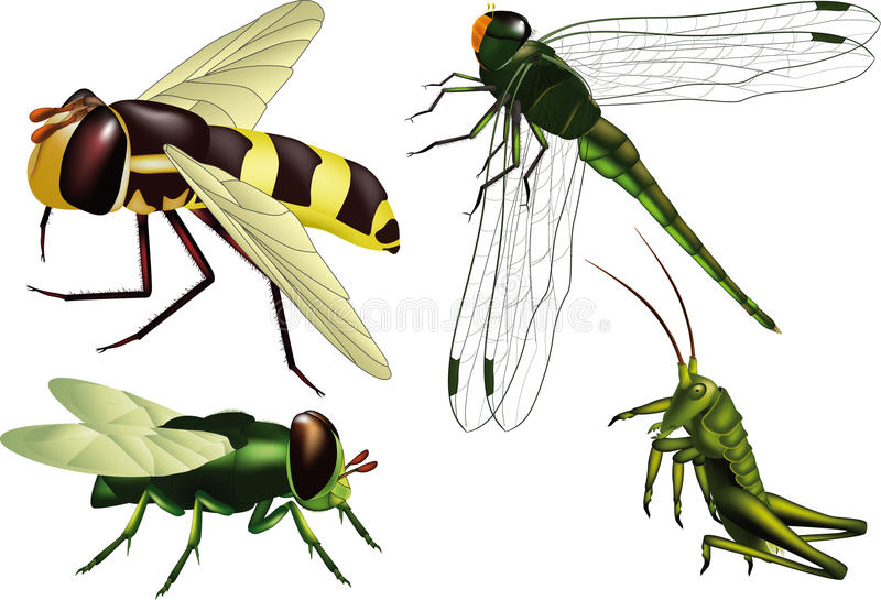 Insects stock illustration