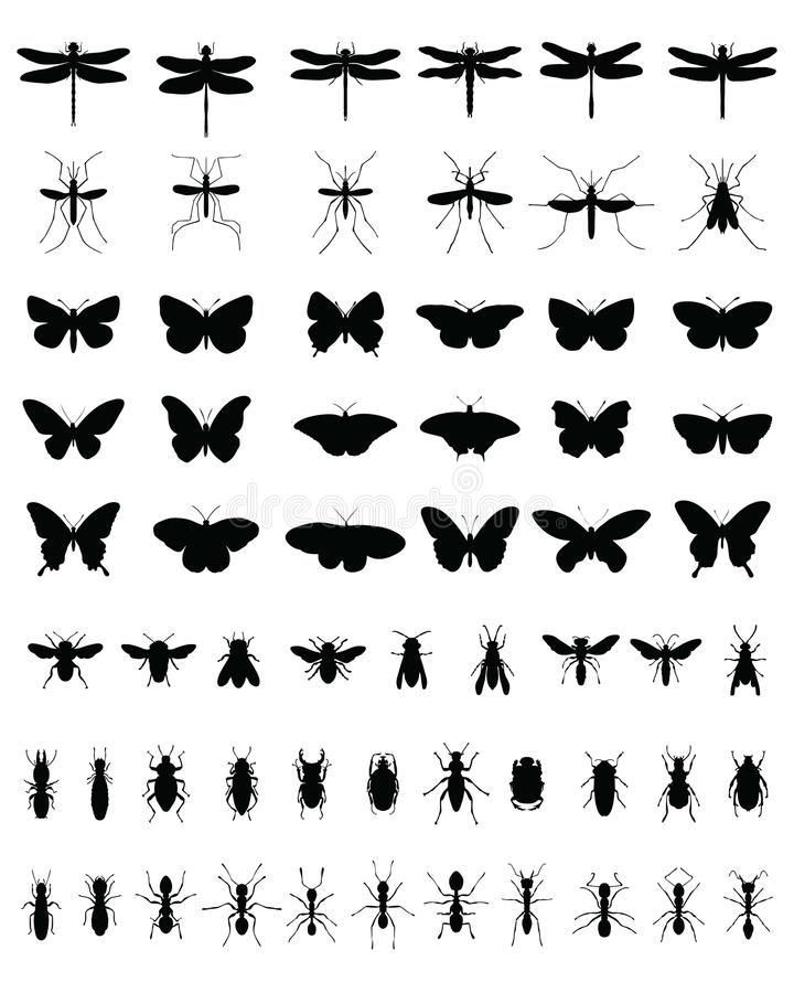 Free Insects 2 Royalty Free Stock Images - 43925309