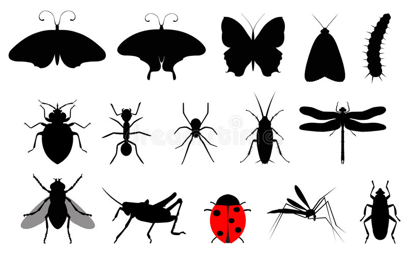 Insects. Illustration of 15 different bugs: butterflies, flies, ladybugs, mosquitoes, roaches, caterpillars, moths, ants, spiders, dragonflies, grasshoppers
