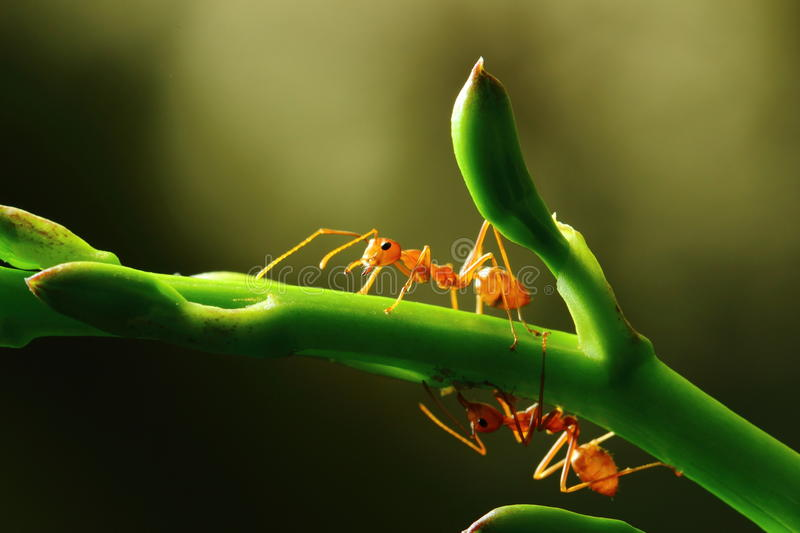 Insects, ants royalty free stock images