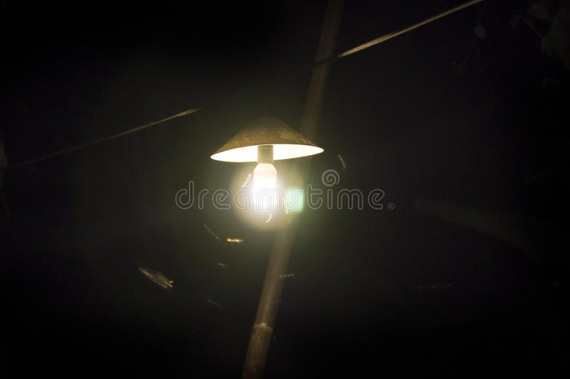 Insects around a light bulb. Insects flying around a light bulb, Thailand stock photos