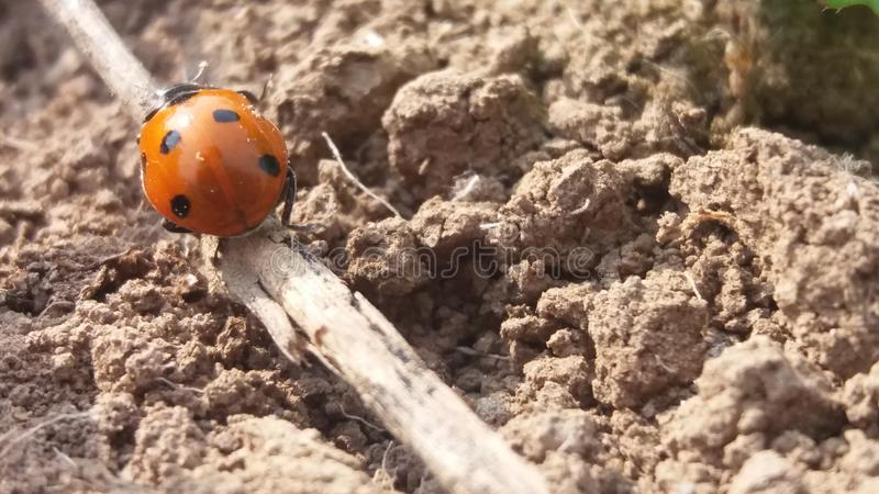 insects stock image