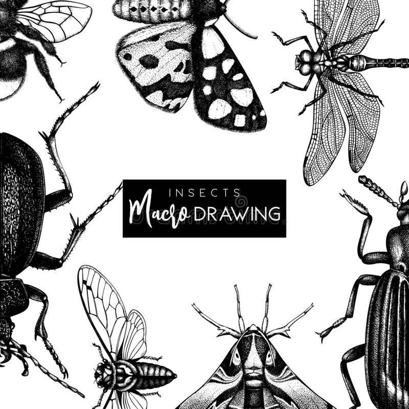 Vector frame with high detailed butterflies, beetles, cicada, bumblebee illustrations. Hand drawn insects design. Vintage entomolo vector illustration