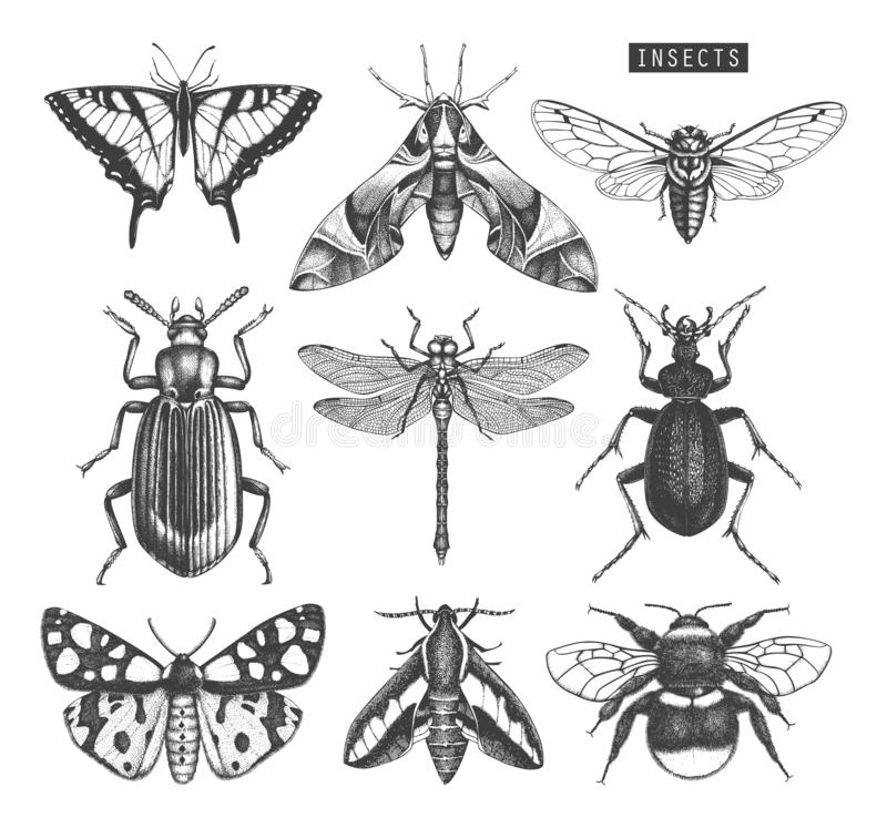 Vector collection of high detailed insects sketches. Hand drawn butterflies, beetles, dragonfly, cicada, bumblebee illustrations o royalty free illustration