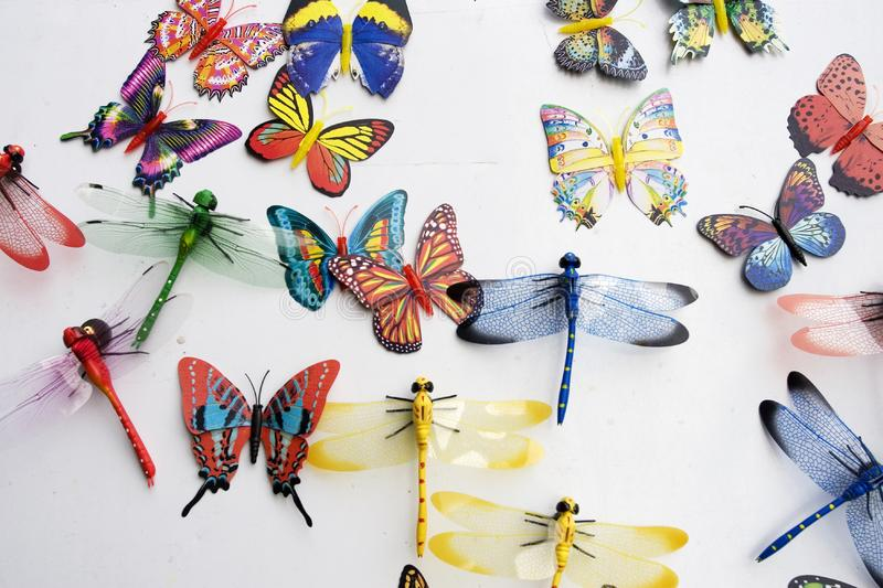 Download Insects collection stock photo. Image of board, flaming - 6419986