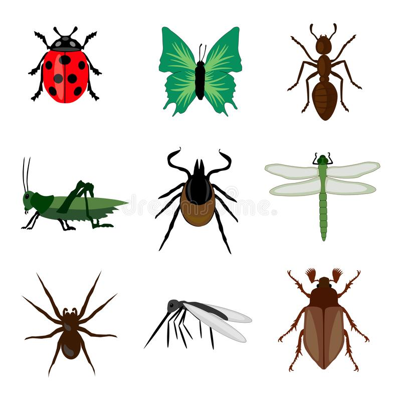 Insects collection set isolated animal white background stock illustration