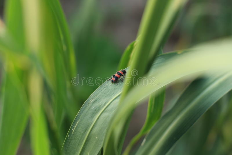 Insects and crops stock photos