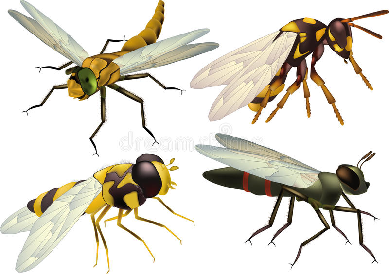 Insects a dragonfly a fly vector illustration