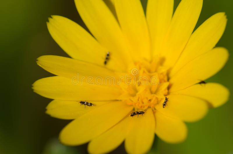 Insects on a flower. stock photos