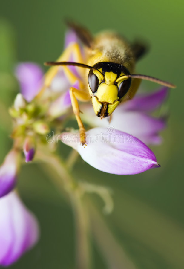 insects on flowers royalty free stock photos