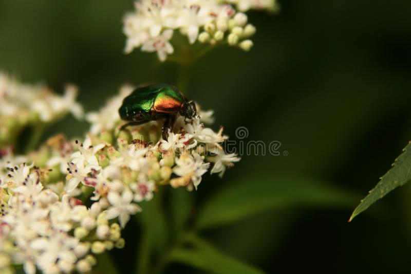Insects flowers grass green summer nature stock photography