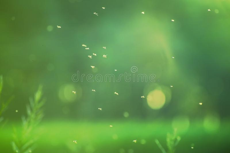 Insects fly in the air at shallow depth of field royalty free stock photo