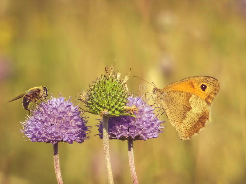 Insects frienship royalty free stock images