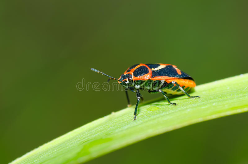 Download Insects on the grass stock image. Image of place, green - 41854419
